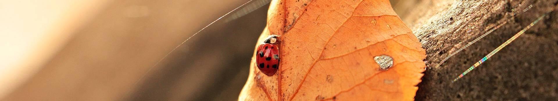 ladybug-1789065_1920